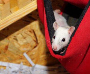 Hiina metall roti aasta, ettevõtluses roti aasta, ettevõtlikkus, ettevõtlusega alustamine